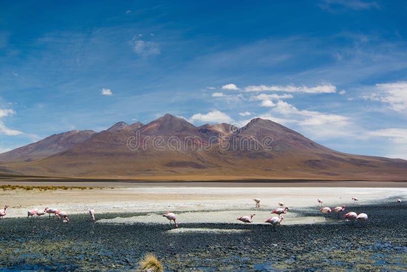 Laguna Hedionda - αλατούχος λίμνη με τα ρόδινα φλαμίγκο στοκ εικόνα