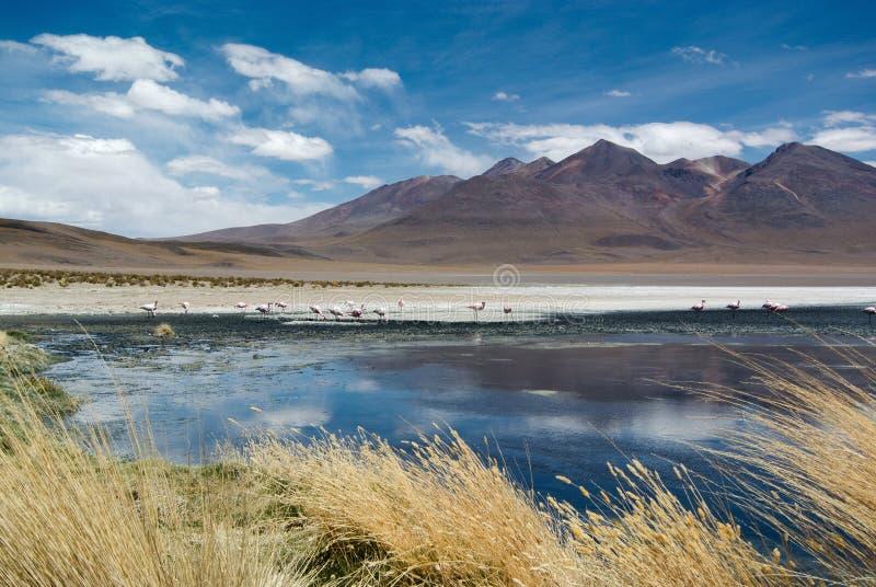 Laguna Hedionda - αλατούχος λίμνη με τα ρόδινα φλαμίγκο στοκ εικόνες