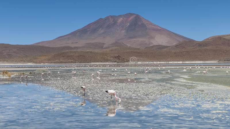 Laguna Hedionda - la Bolivie photo stock