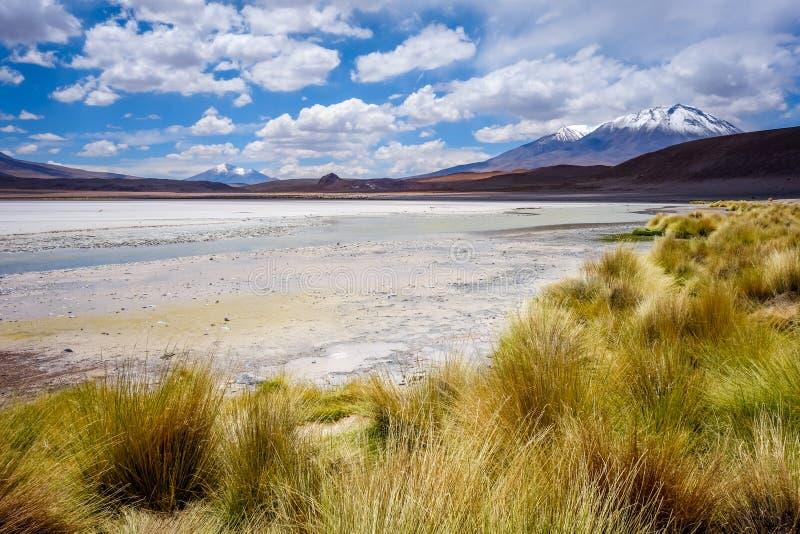 Laguna Honda en el reserva de Lipez Altiplano del sud, Bolivia imágenes de archivo libres de regalías
