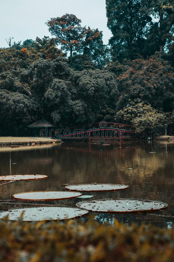 Laguna japonesa fotos de archivo