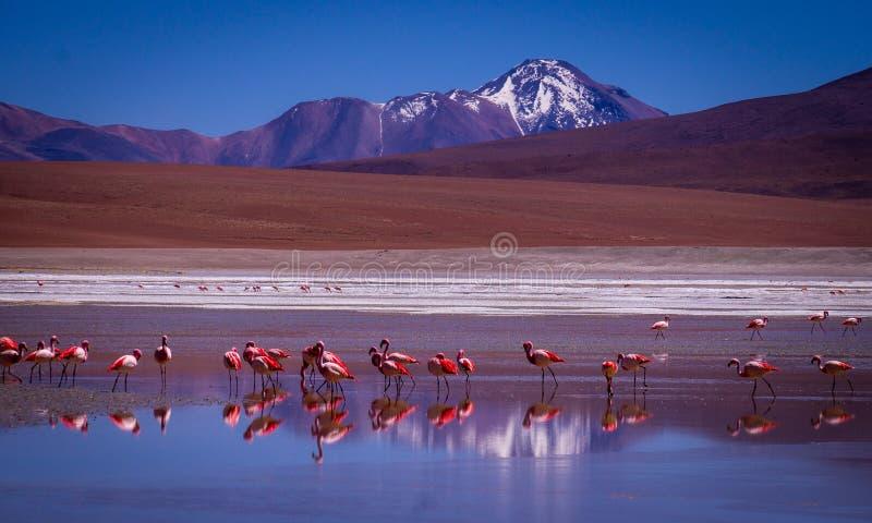 Laguna Kara lagun med flamingo och reflexionen av berget fotografering för bildbyråer