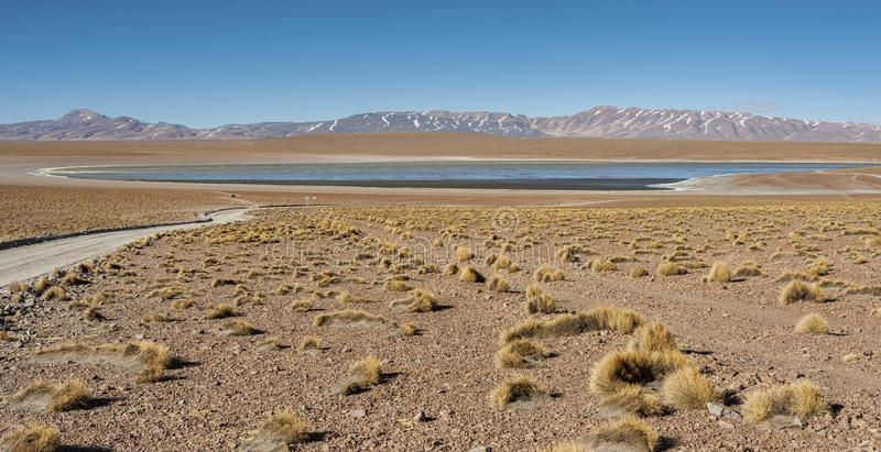 Laguna Kollpa Kkota Collpa Laguna, Sud Lípez Province, Potosí Department. Bolivia royalty free stock photos