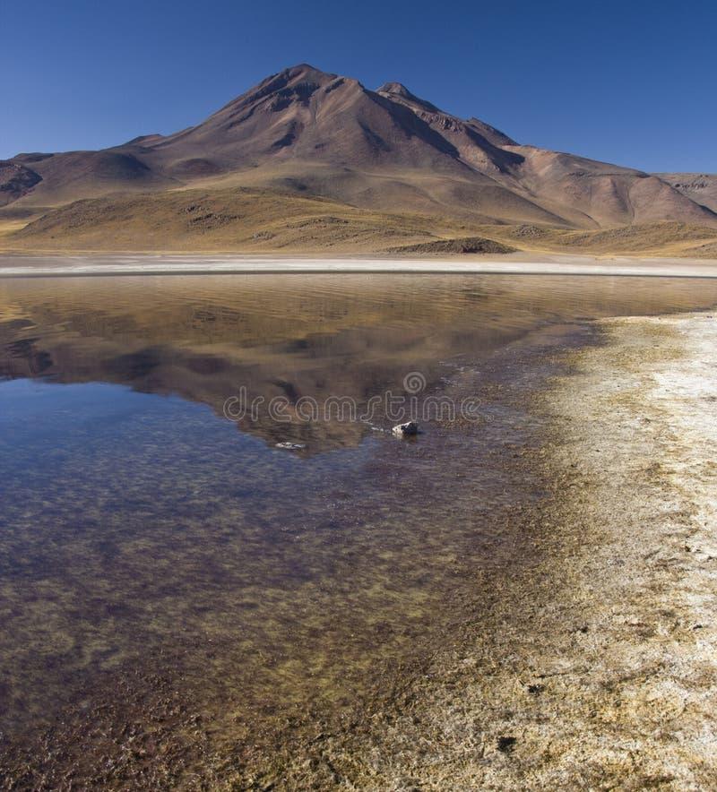Laguna Miscanti foto de archivo libre de regalías