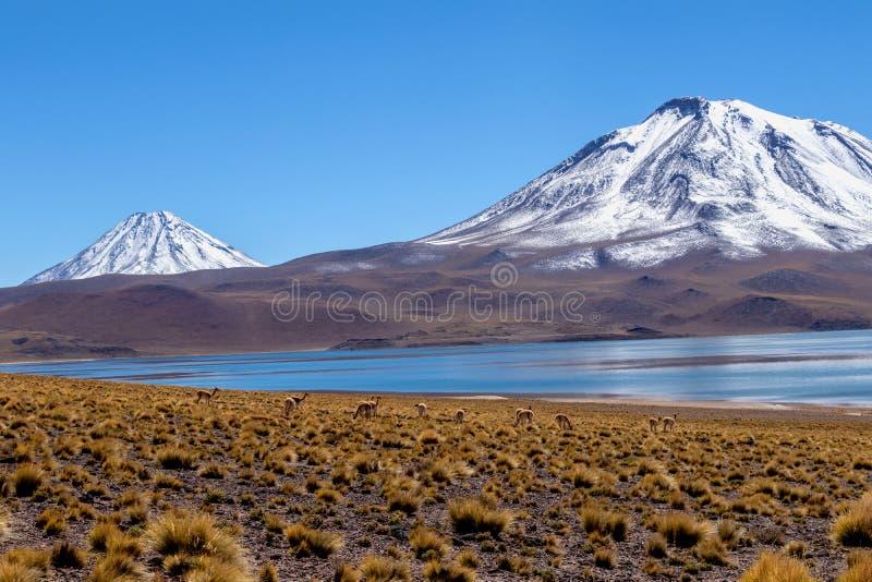 Laguna Miscanti, livello nelle montagne delle Ande nel deserto di Atacama, Cile del Nord, Sudamerica del lago fotografie stock