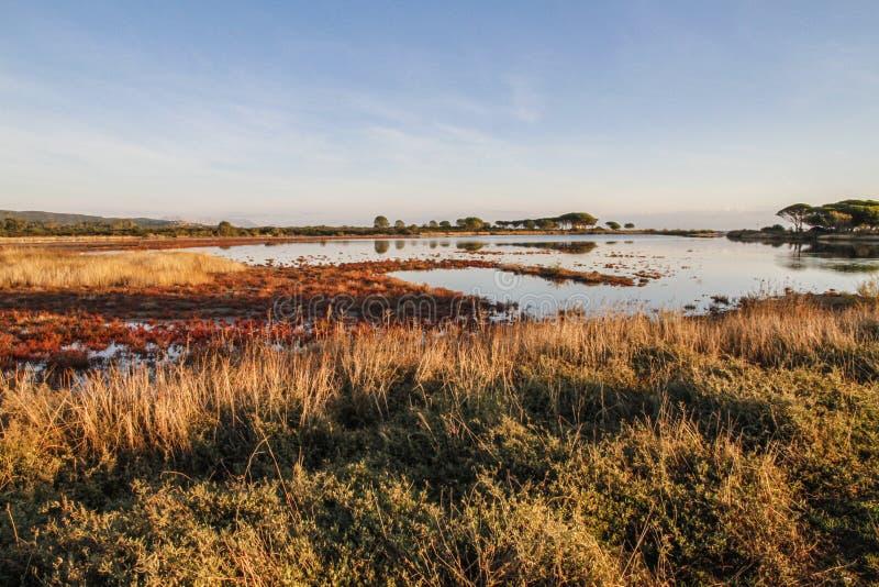 Laguna otaczająca czerwonawą roślinnością która odbija w płaskiej wodzie przy świtem w Sardinia fotografia stock