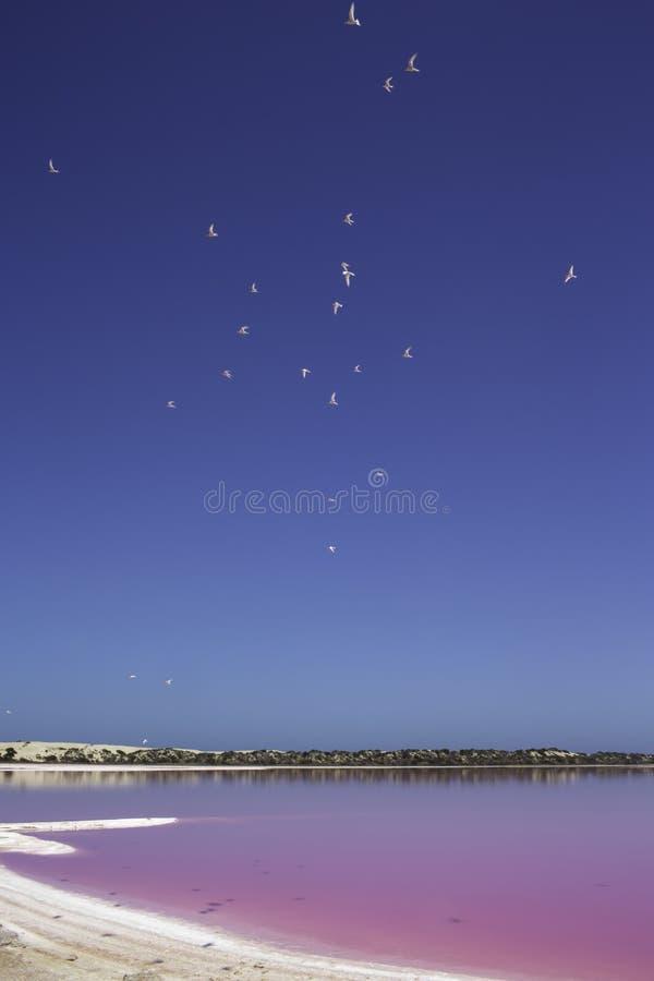 Laguna rosa della capanna del lago a porto Gregory, Australia occidentale, Australia fotografia stock