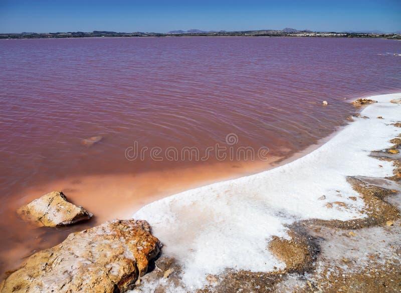 Laguna Salada em Torrevieja, Espanha Lago salgado cor-de-rosa Parque natural dos Salinas imagens de stock