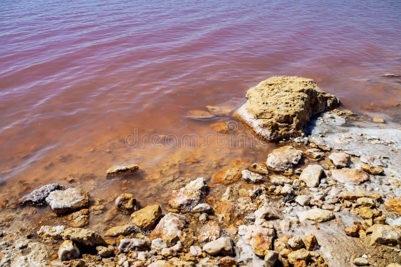 Laguna Salada em Torrevieja, Espanha Lago salgado cor-de-rosa Parque natural dos Salinas imagem de stock