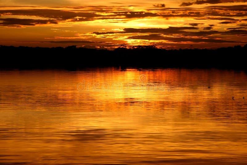 Laguna at sunset. View over the Laguna at sunset. National Park Cuyabeno. Ecuador stock photography