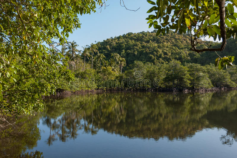 Laguna tropical del mangle en la isla de Danjugan, Filipinas fotos de archivo libres de regalías