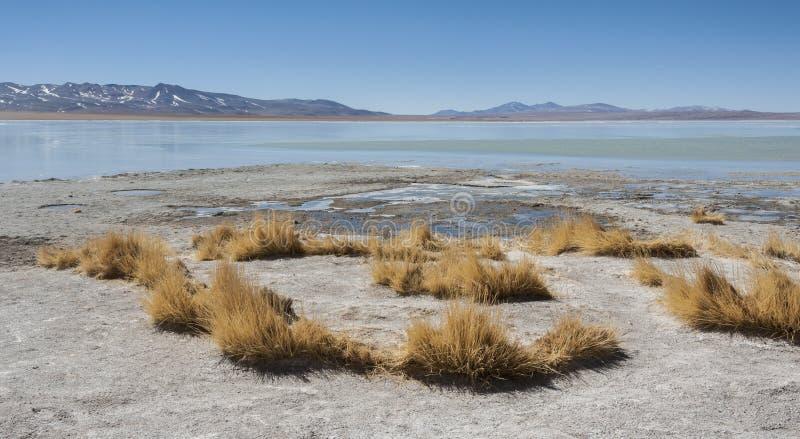Laguna y Termas de Polques hot spring pool with Salar de Chalviri in background, Salar de Uyuni, Potosi, Bolivia. South America royalty free stock photography