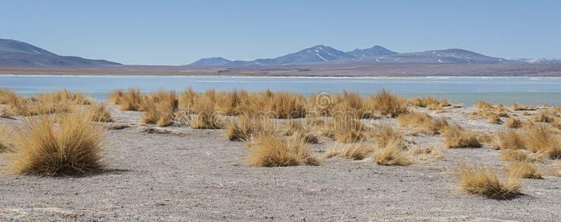 Laguna y Termas de Polques hot spring pool with Salar de Chalviri in background, Salar de Uyuni, Potosi, Bolivia. South America royalty free stock image