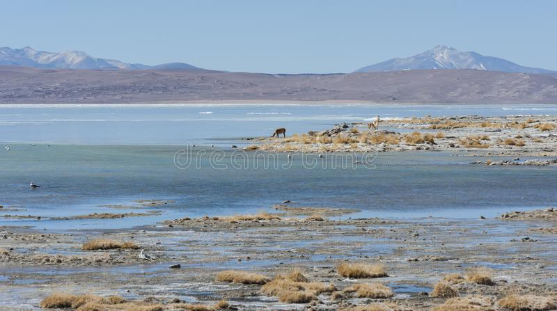 Laguna y Termas de Polques hot spring pool with Salar de Chalviri in background, Salar de Uyuni, Potosi, Bolivia royalty free stock photography