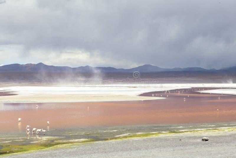 Lagune in Bolivië royalty-vrije stock afbeeldingen