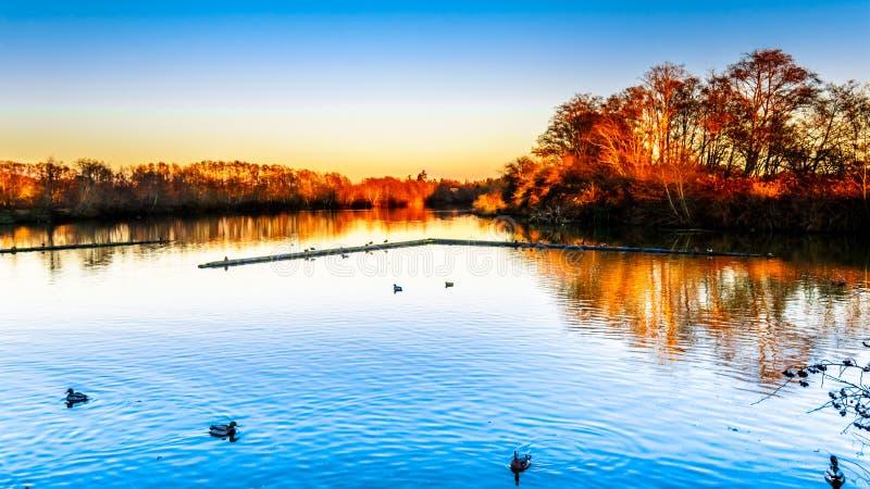 Lagune dans la réserve d'oiseaux de Reifel près de Ladner, AVANT JÉSUS CHRIST, le Canada images libres de droits