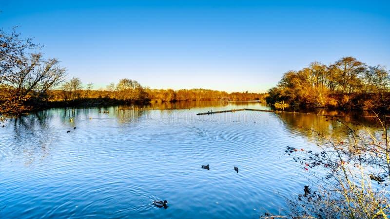 Lagune dans la réserve d'oiseaux de Reifel près de Ladner, AVANT JÉSUS CHRIST, le Canada image stock