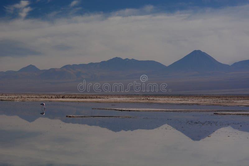 Lagune de Chaxa Réserve nationale de flamenco de visibilité directe chile photos stock
