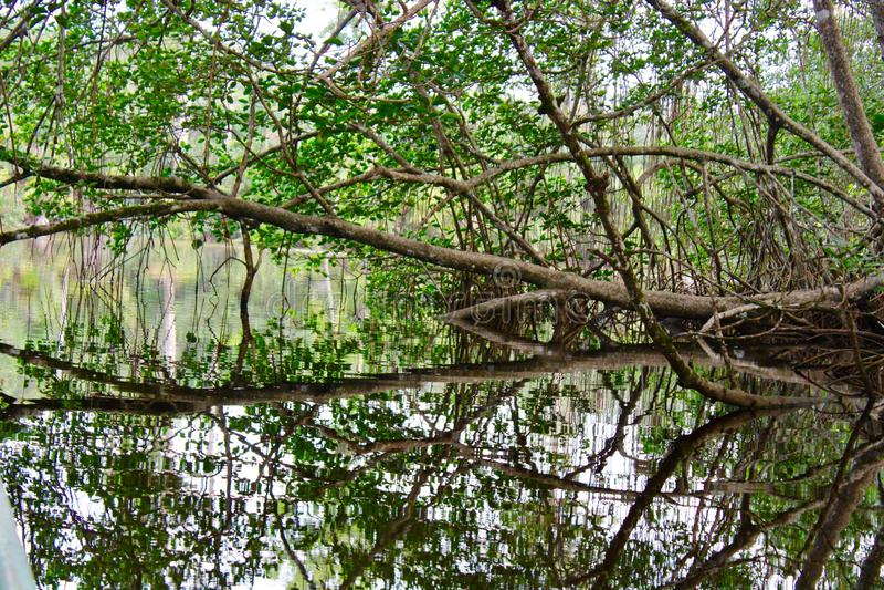 Lagune de jungle de Costa Rican dans les Caraïbe image stock