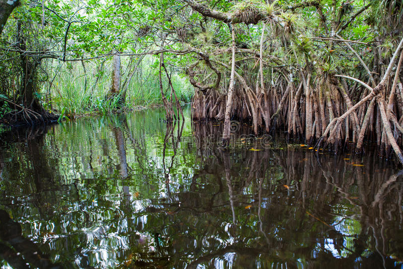 Lagune de palétuvier photos libres de droits