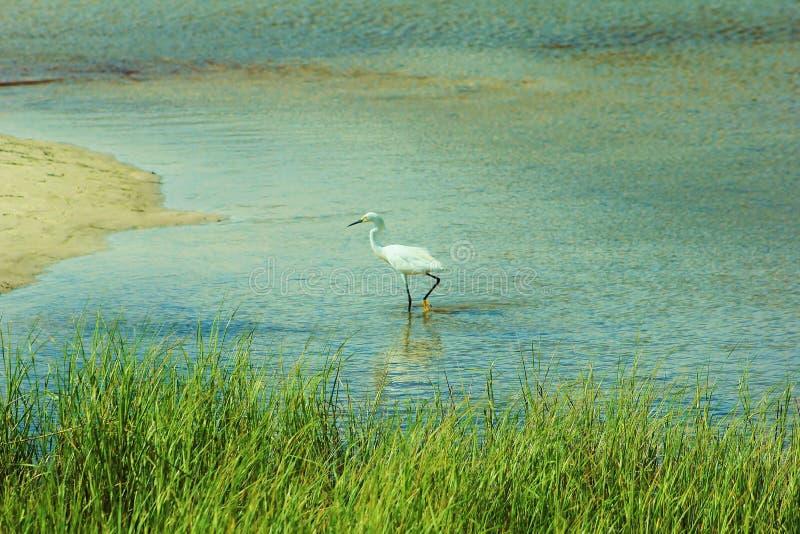 Lagune de roitelet de la Floride de plage de Panamá City photos stock