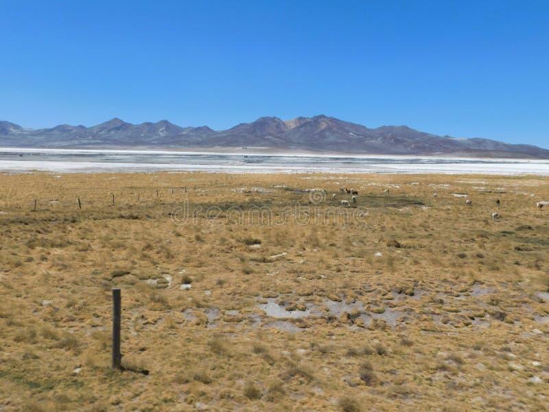 Lagune de sel des salines photos stock