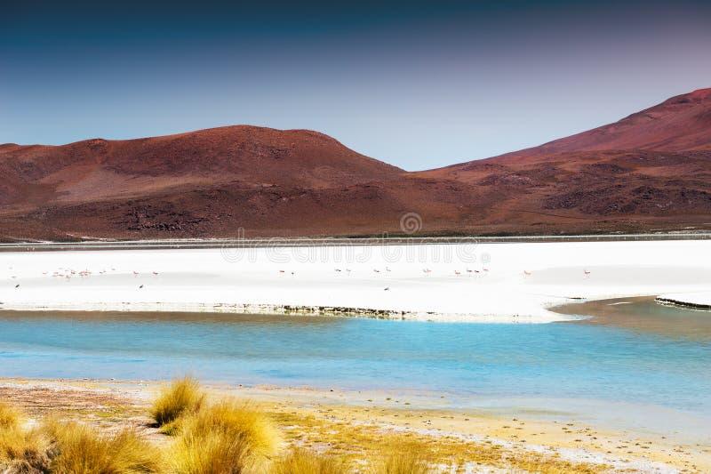 Lagune op grote hoogte met roze flamingo's op Altiplano-plateau, Bolivië royalty-vrije stock afbeeldingen