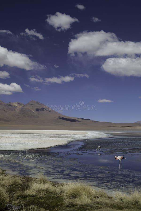 Lagune ou lac dans l'horizontal de flamant des Andes Bolivie photographie stock libre de droits
