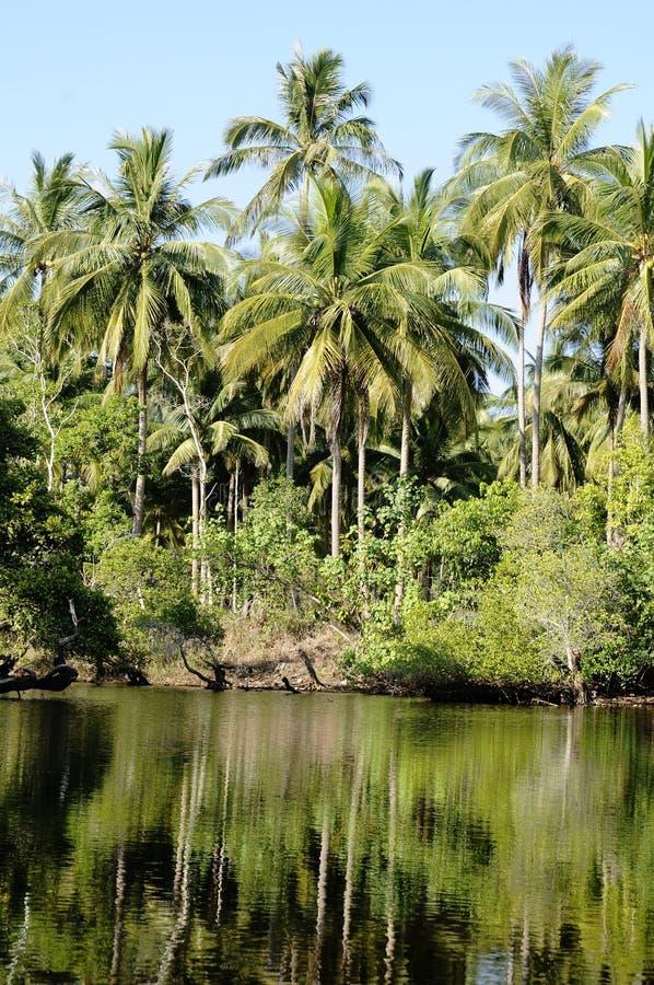 Lagune und Dschungel stockbild
