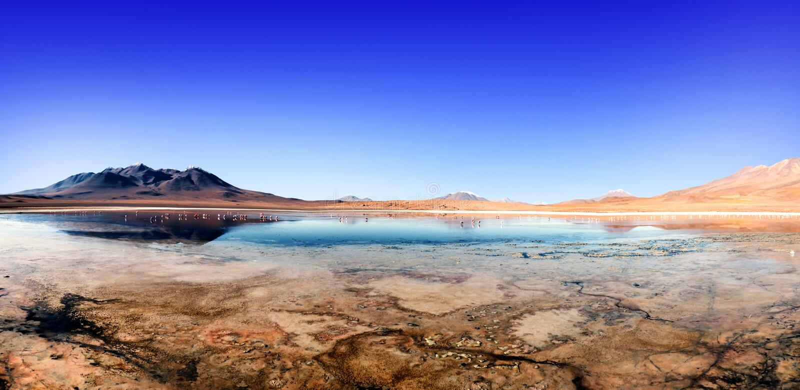 Lagunflamingo Bolivia royaltyfri fotografi