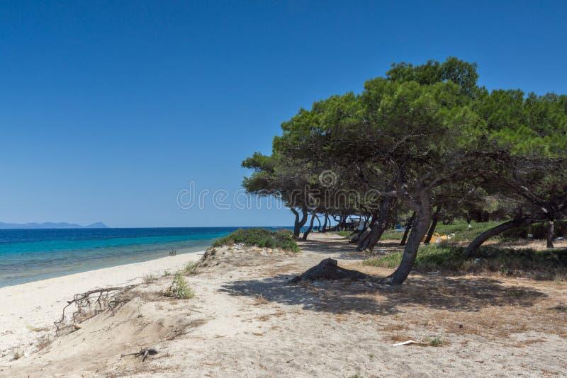 Laguny plaża przy Kassandra półwysepem, Chalkidiki, Środkowy Macedonia, Grecja zdjęcie royalty free