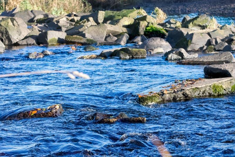 Laigh米尔顿高架桥岩石河在Kilmarnock埃尔郡苏格兰,渔目的地三文鱼可以从7月下旬被捉住 图库摄影