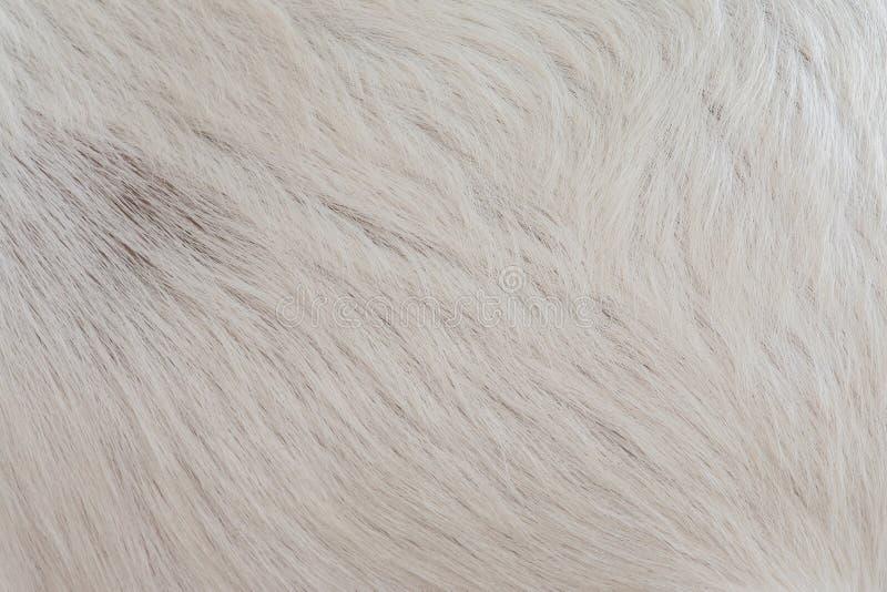 Laine blanche de macro image de chèvre images libres de droits
