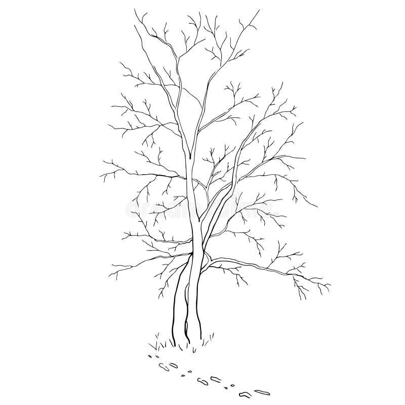laisse l'arbre photographie stock