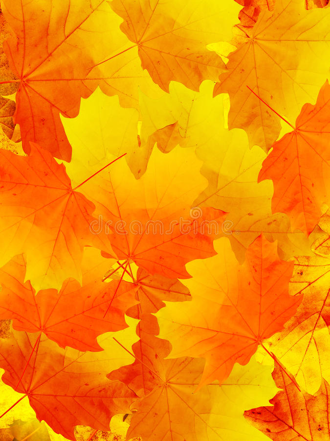 Laisse l'automne en bois photos stock