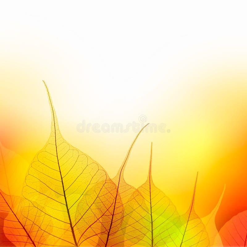Laisse la frontière de la saison de couleur d'automne sur le fond blanc illustration de vecteur