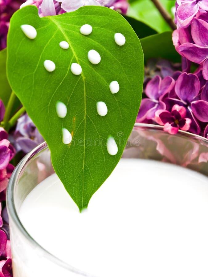 Lait et lilas photo stock