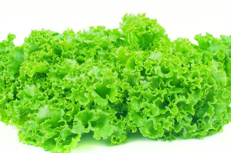 laitue Feuille de salade Feuilles fra?ches de laitue sur le fond blanc photos stock