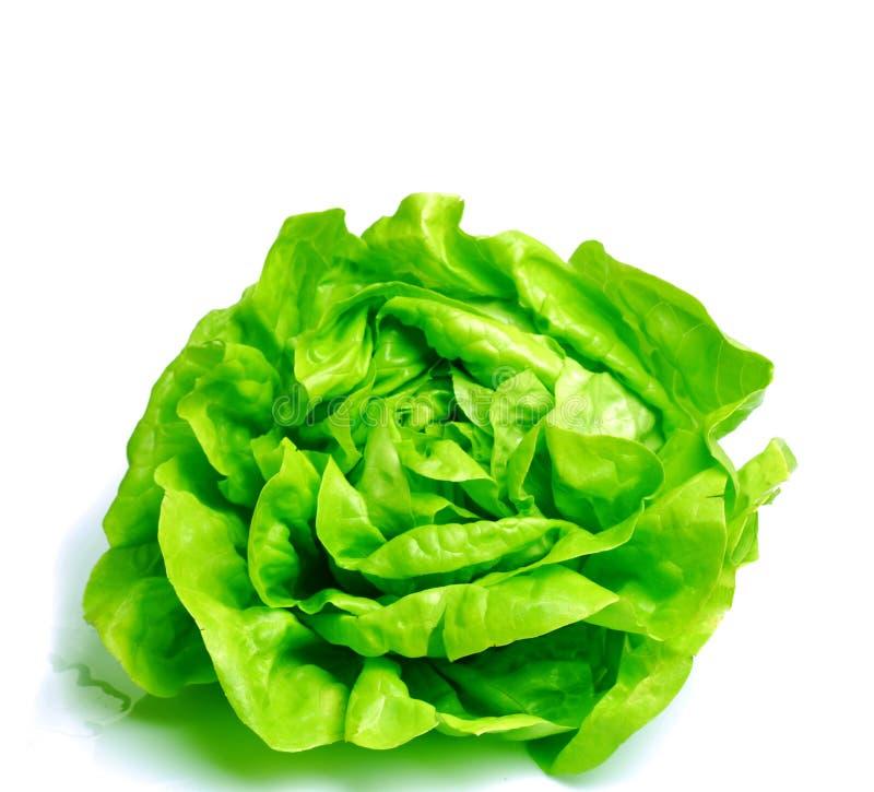 Laitue fraîche de salade photographie stock