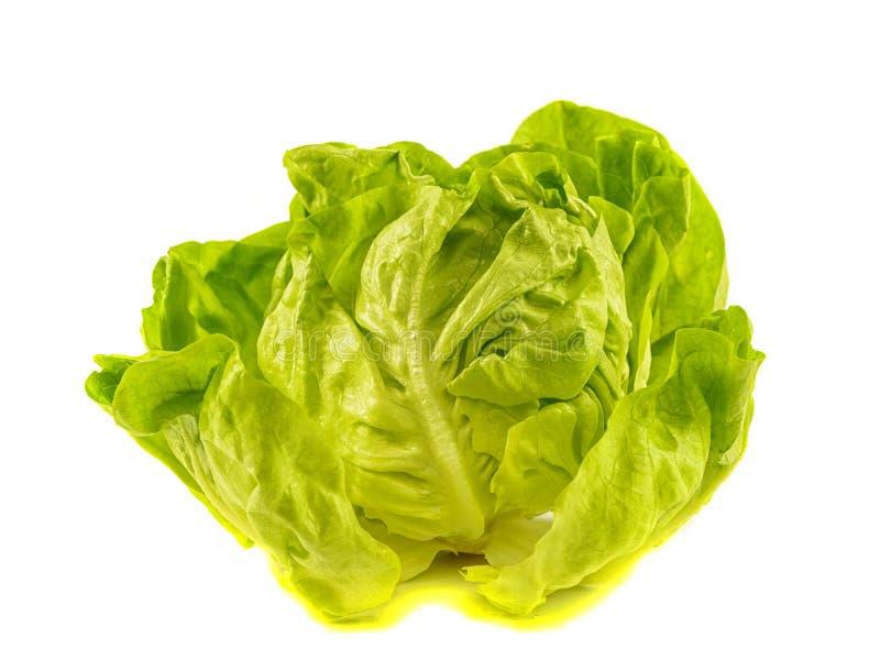 Laitue fraîche de salade image stock