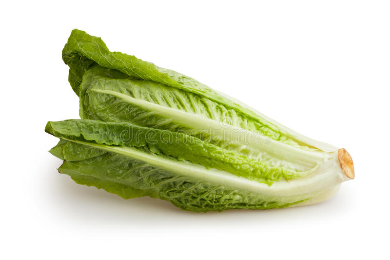 Laitue romaine image stock