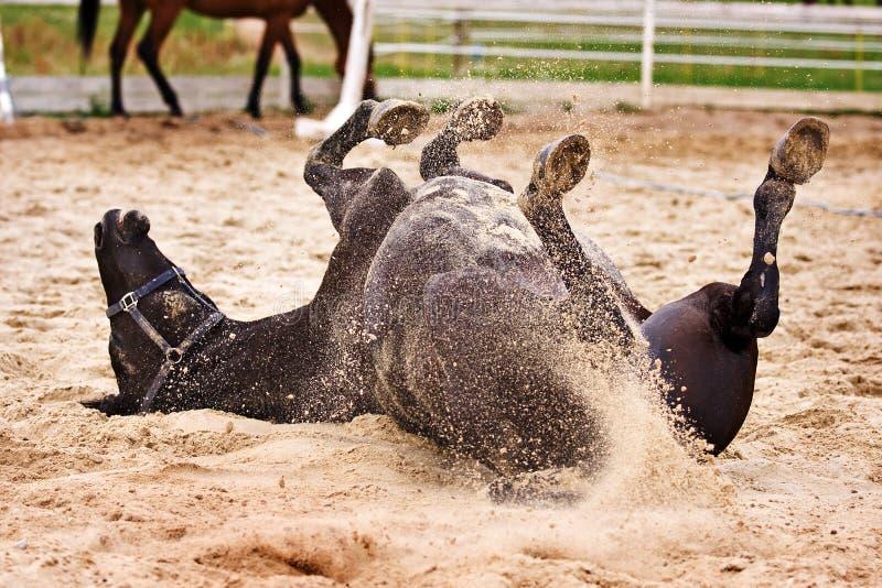Laiyng do cavalo na areia imagem de stock royalty free
