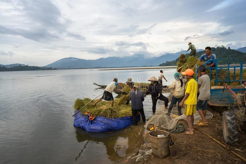 LAK Dak, Βιετνάμ - 22 Οκτωβρίου 2016: Οι αγρότες φορτώνουν το συγκομισμένο ρύζι από την επιπλέουσα βάρκα μέχρι το όχημα μεταφορών στοκ εικόνες