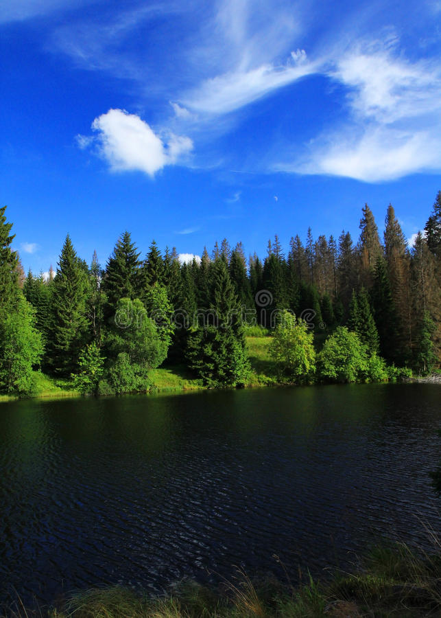 Download Laka in Sumava stock image. Image of laka, dark, trees - 20628135