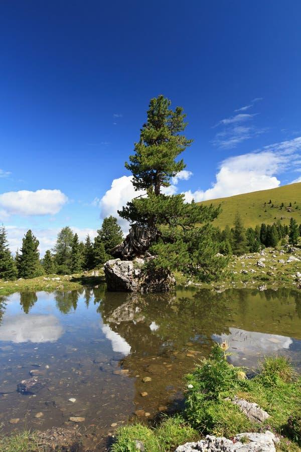 lake över tree arkivbild