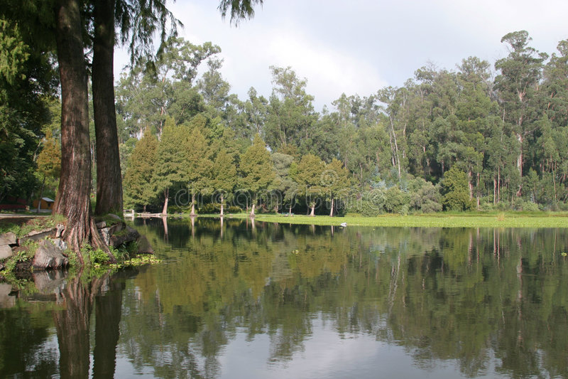 Download Lake stock image. Image of lakes, reflexions, trunks, skies - 375845