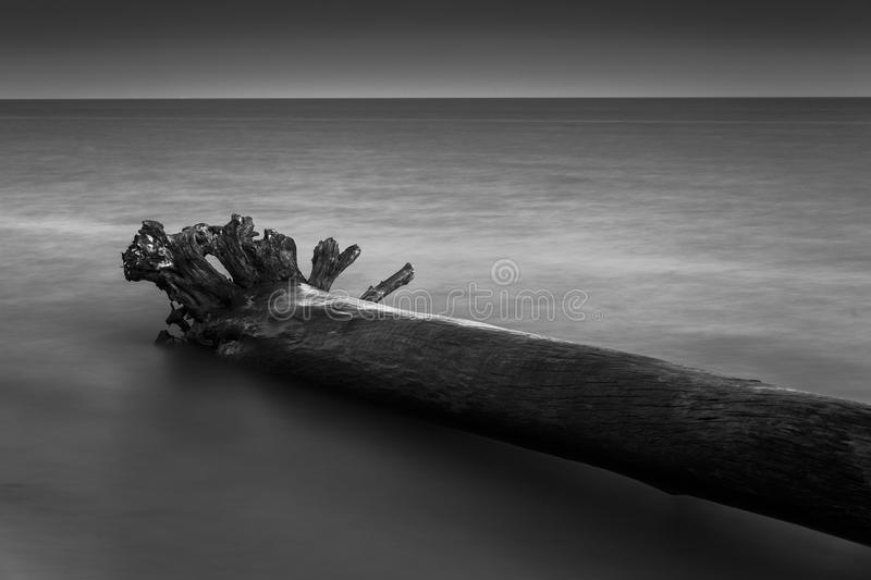 Lake Abstract. A abstract view of a marooned driftwood log along the shore of Lake Erie royalty free stock images