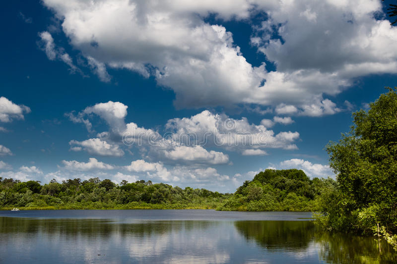 Lake Alice in gainesville royalty free stock images