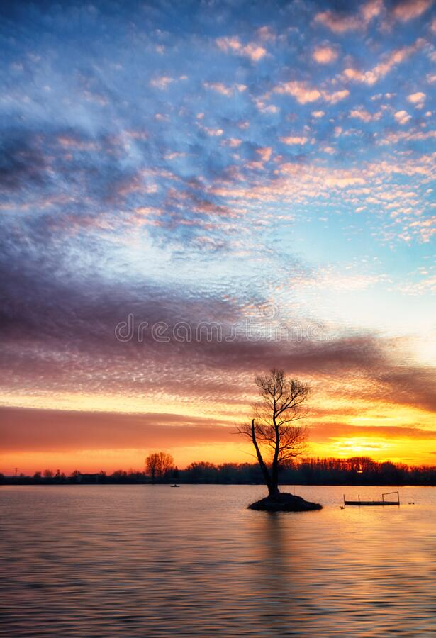 Lake with alone tree at dramatic sunset stock image