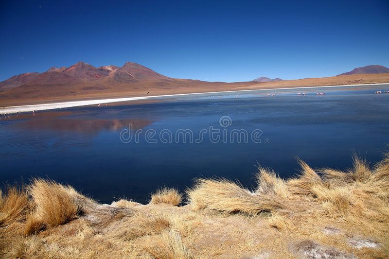 Lake in the Andes, Bolivia stock photo